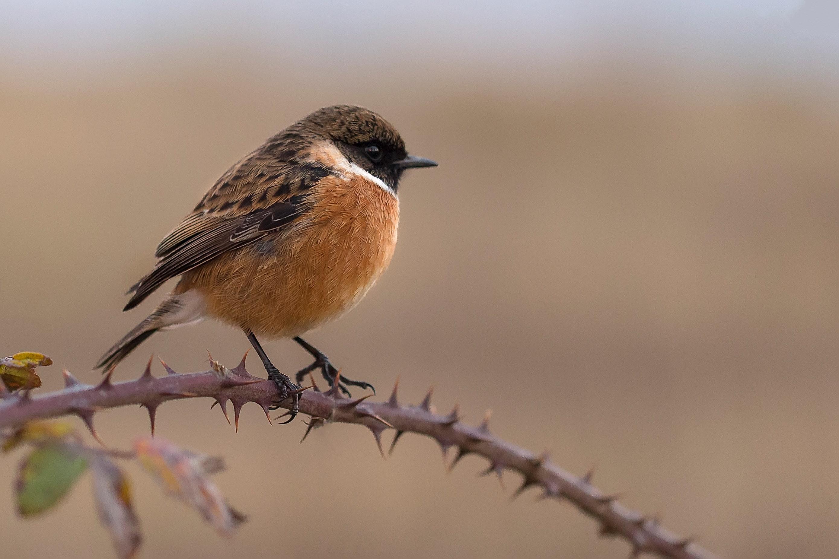 Liten fågel på en pinne
